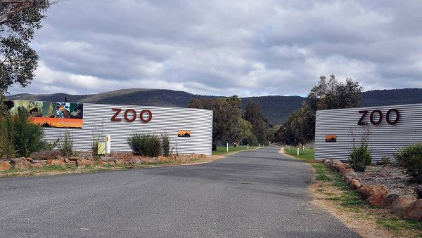 Giraffe Zoo | Halls Gap | Animal Transport | Big Bow