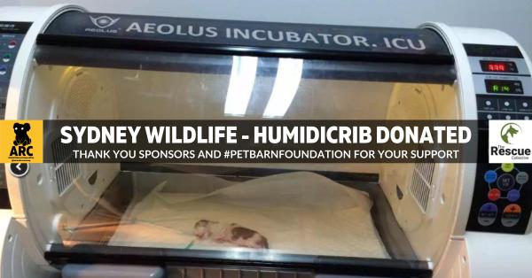 the rescue collective incubator